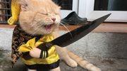 Internet oszalał na punkcie tego kota. Nic dziwnego
