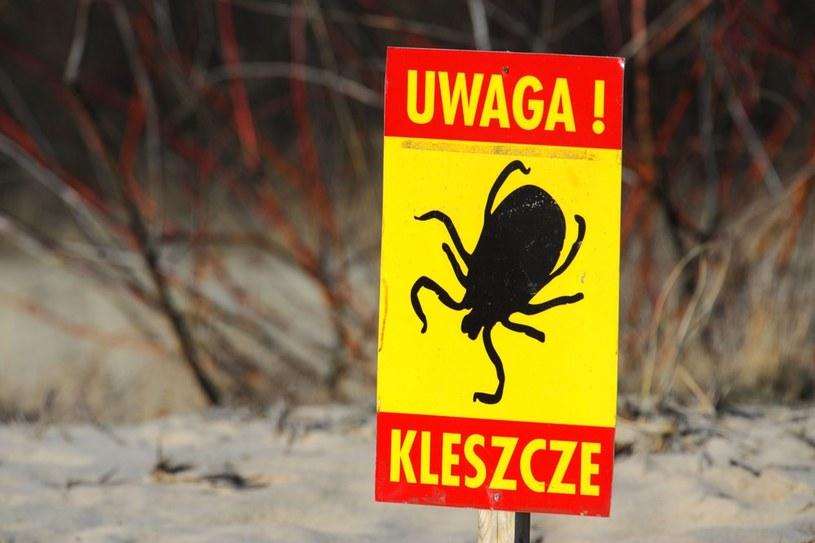 Inwazja kleszczy /Piotr Matusewicz /East News