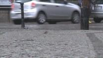 Inwazja szczurów we Wrocławiu