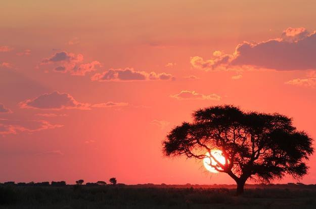 Inwestorzy na rynku złota są zainteresowani Afryką /©123RF/PICSEL