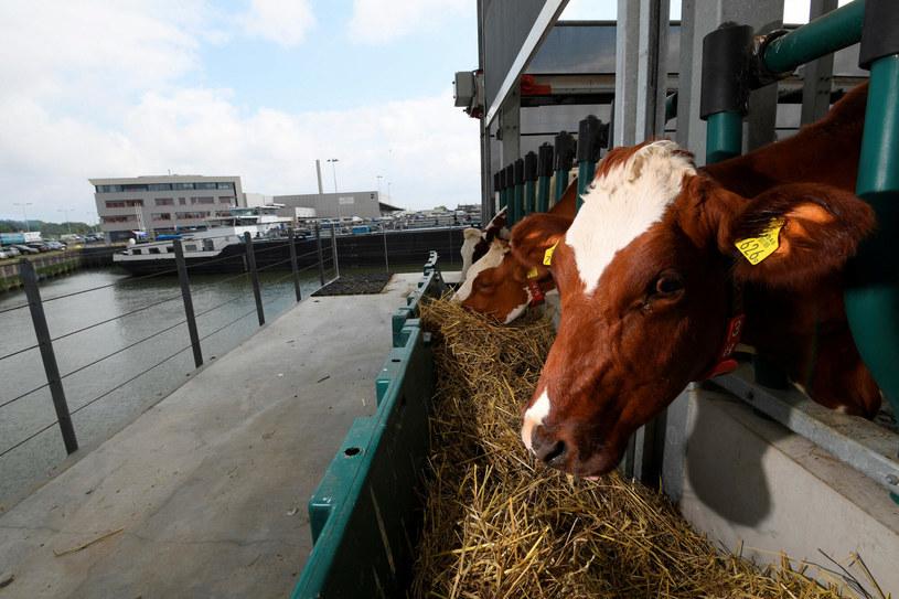 Inwestycja jest zaczątkiem przywracania rolnictwa na tereny miejskie /JOHN THYS / AFP /East News