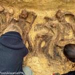 IPN odnalazł szczątki kobiet i dzieci w leśnej mogile