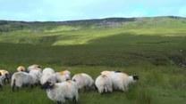 Irlandia Północna. Rolnicy boją się przywrócenia granicy