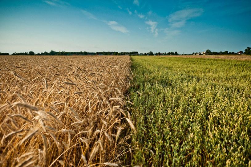 """""""Istnieje kilka przypadków, w których GMO uratowało cały sektor rolnictwa"""" /Jakub Wysocki /East News"""