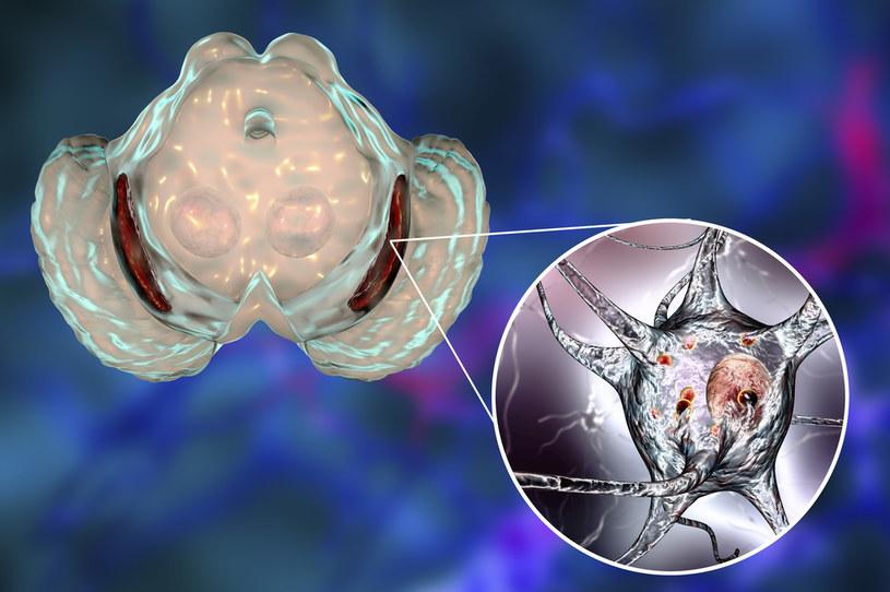 Istota czarna w mózgu /123RF/PICSEL