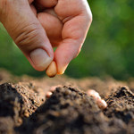 Izba Zbożowo-Paszowa: Rolnicy nie chcą sprzedawać zbóż