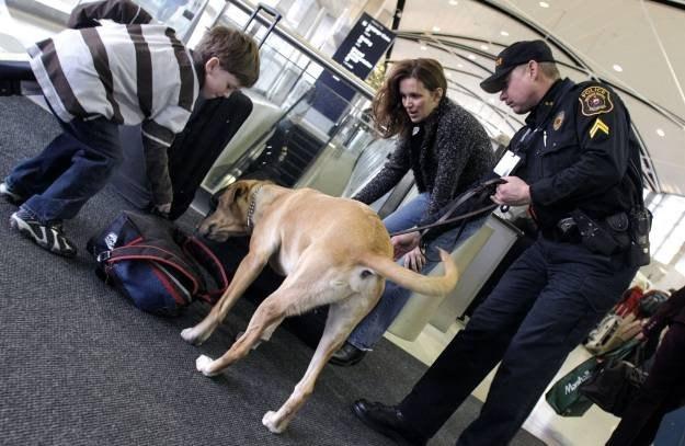 Izraelski wynalazek może zastąpić psy wykorzystywane do kontroli bagażu na lotniskach /AFP