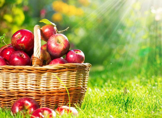 Jabłka dobrze zjadać przynajmniej 2 dziennie /123RF/PICSEL