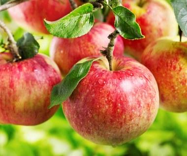 Jabłka i ich drogocenne właściwości