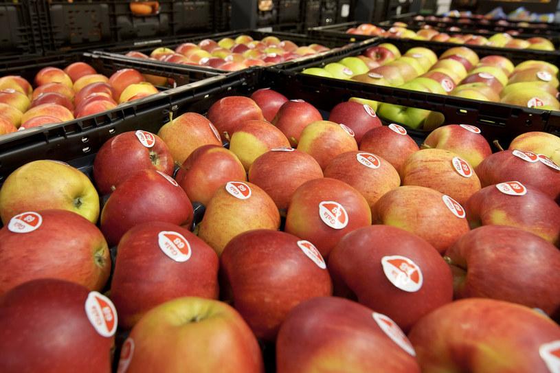 Jabłka w skrzynkach. /Stanislaw Bielski/REPORTER /East News