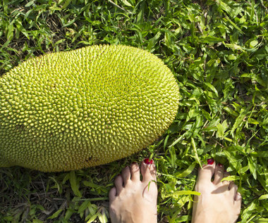Jackfruit: Bomba witaminowa o leczniczych właściwościach