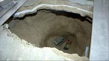 Jaczów: Szczury zagnieździły się pod posadzką domu