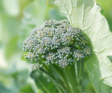 Jadalne liście popularnych warzyw