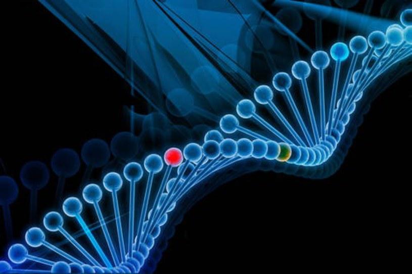 Jadłospis tworzy się w oparciu o profil genetyczny uzyskany na podstawie badania DNA /East News