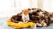 Jak bawić się z kotem w domu?