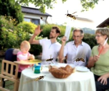 Jak chronić dom, żywność i skórę przed osami i pszczołami?
