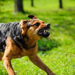 Jak chronić kota i psa domowego przed wścieklizną?