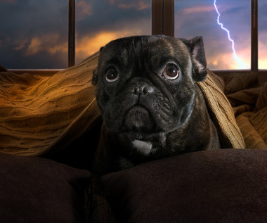 Jak chronić psa przed burzą?