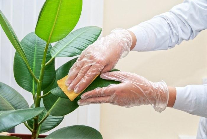 Jak czyścić liście roślin /© Photogenica