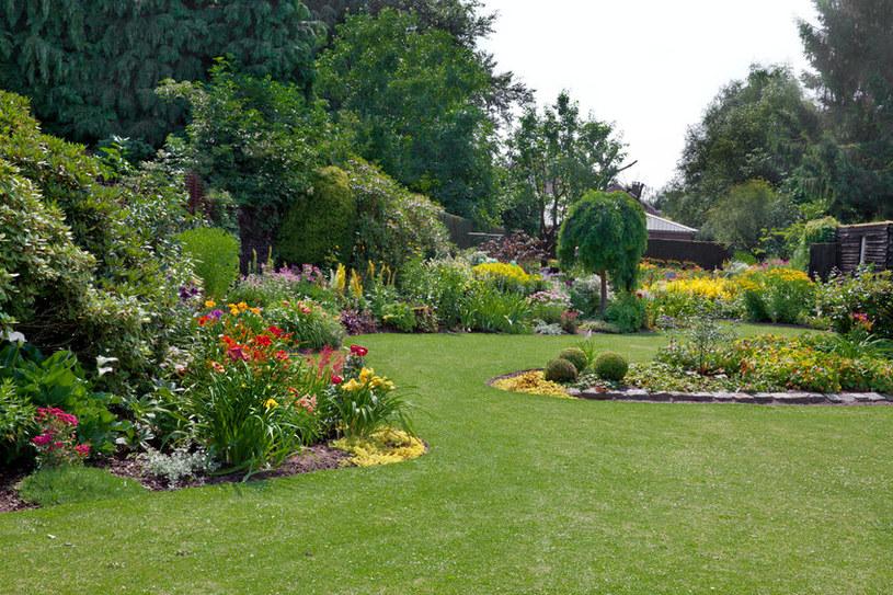 Jak dbać o trawnik i piękny ogród? /123RF/PICSEL