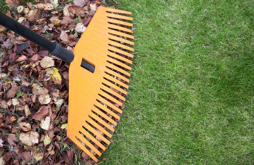 Jak dbać o trawnik jesienią? /©123RF/PICSEL