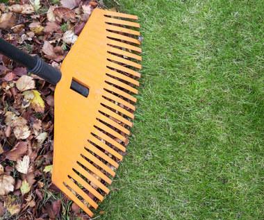 Jak dbać o trawnik jesienią?