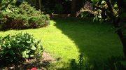 Jak dbać o trawnik w zacienionym miejscu?