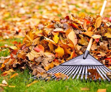 Jak dbać o trawnik we wrześniu?