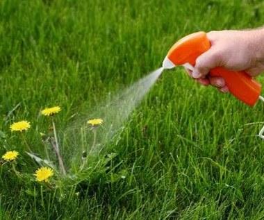 Jak domowym sposobem pozbyć się chwastów z ogrodu?