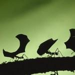 Jak domowym sposobem pozbyć się mrówek?