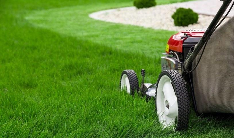 Jak dosiewać trawnik? /123RF/PICSEL