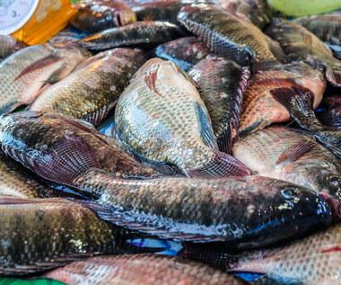 Jak filetować rybę?