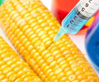 Jak genetycznie modyfikowana żywność niszczy twoje zdrowie?
