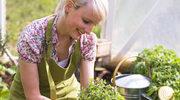 Jak i gdzie zbierać zioła
