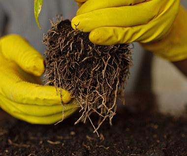 Jak i kiedy rozmnażać rośliny doniczkowe?