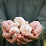 Jak jeść grzyby, żeby sobie nie zaszkodzić?