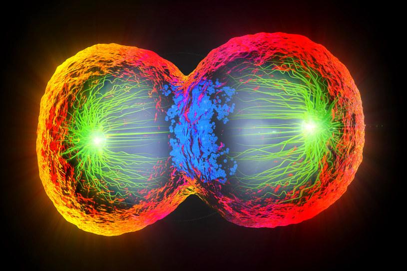 Jak komórki zaczęły się dzielić? Jak powstało życie? Czy kiedyś uda nam się odpowiedzieć na te pytania? /123RF/PICSEL