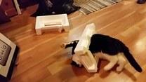 Jak na kota przystało - utknął w kartonie