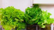 Jak najlepiej przechowywać sałatę?