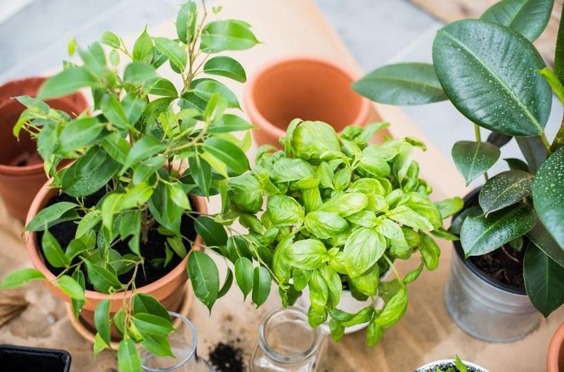 Jak najlepiej rozmnożyć rośliny? /©123RF/PICSEL