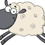 Jak narysować owieczkę?