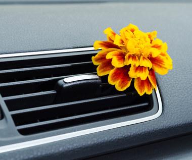 Jak naturalnie odświeżyć powietrze wewnątrz samochodu?