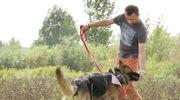 Jak nauczyć psa chodzenia na luźnej smyczy?