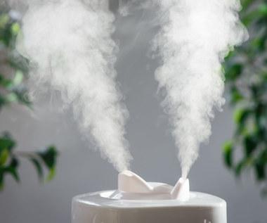 Jak nawilżyć powietrze w domu i zabezpieczyć się przed pleśnią?