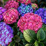 Jak nawozić rośliny latem?