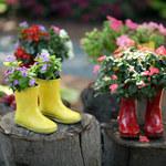 Jak nietypowo posadzić kwiaty i rośliny?