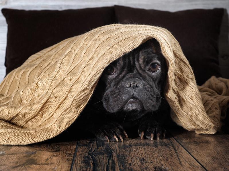 Jak obcinać psu pazury? /123RF/PICSEL