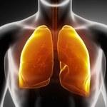 Jak oczyścić płuca za pomocą kurkumy?