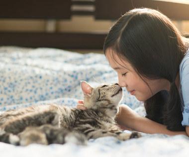 Jak odczytywać sygnały wysyłane przez koty?