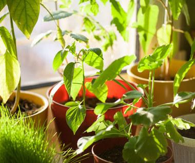 Jak odpowiednio podlewać rośliny? Najważniejsze zasady